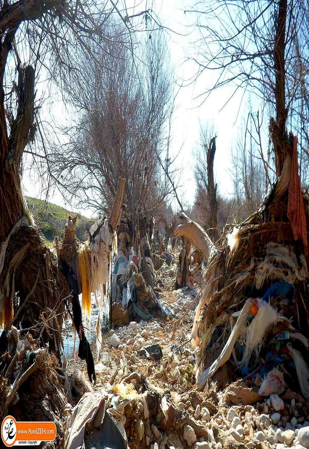 مرثیهای برای درختان زباله گیر در ایذه/ فاجعهای زیست محیطی که از دید مسئولین پنهان مانده + تصاویر