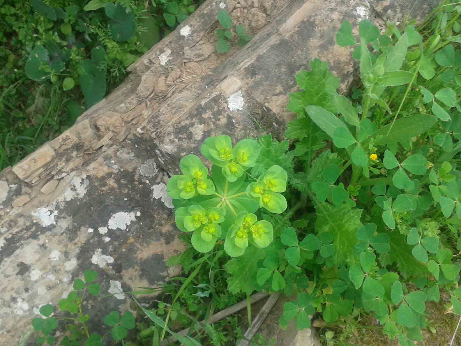 طبیعت زیبای منطقه رمه چر ایذه + تصاویر