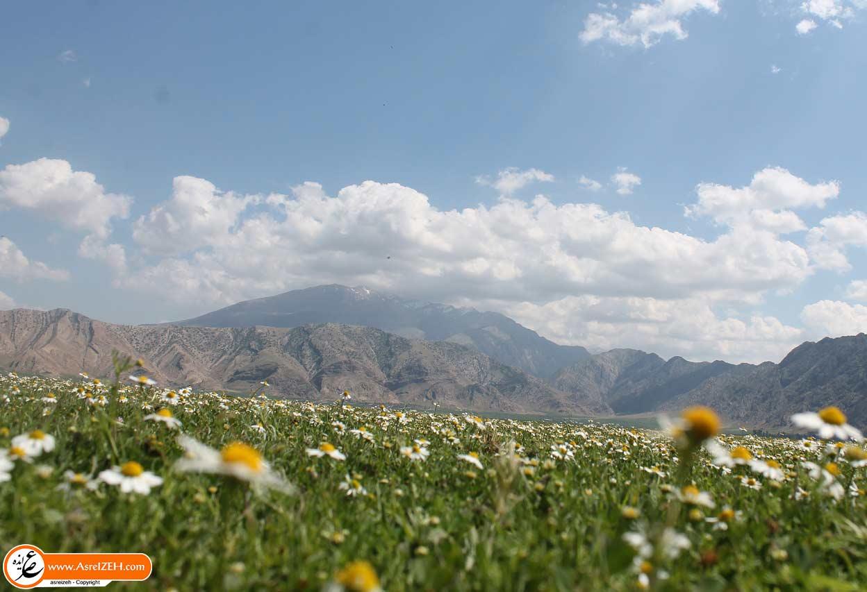 طبیعت بهاری دشت بُندون را از دست ندهید + تصاویر