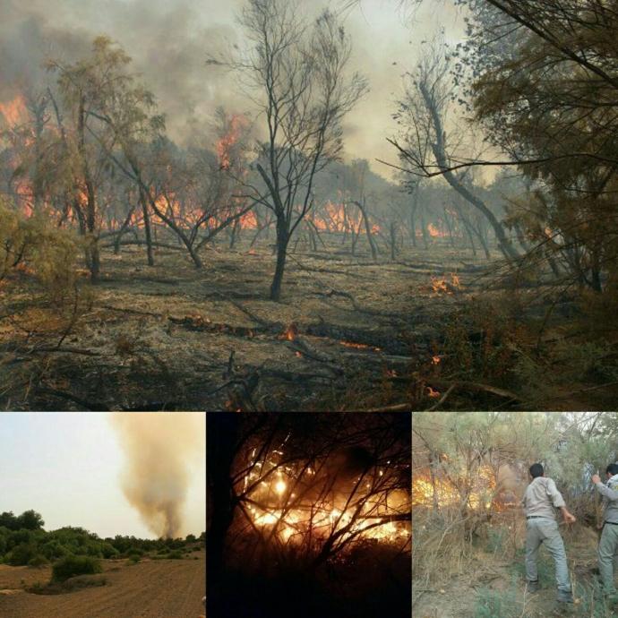 آتش سوزی گسترده در جنگل های حاشیه رودخانه کرخه شوش