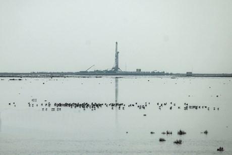 زنده شدن هور العظیم با ۴ میلیارد متر مکعب آب کرخه + تصاویر
