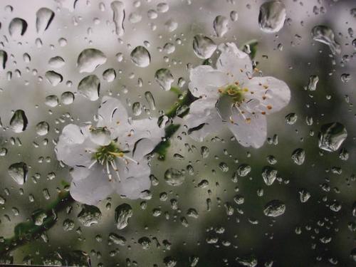 سال نو با باران به ایذه میآید