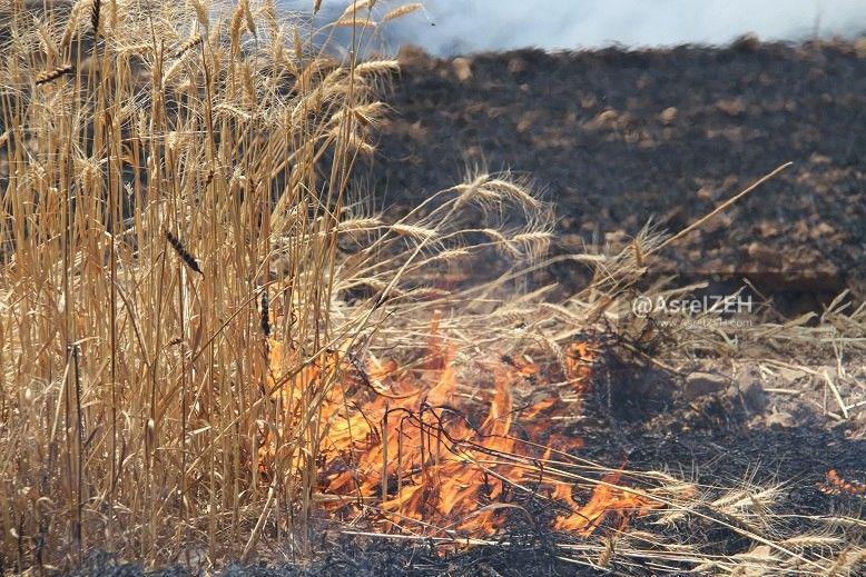 بیش از ۵۰ هکتار از مزارع گندم روستای تکاب ایذه در آتش سوخت