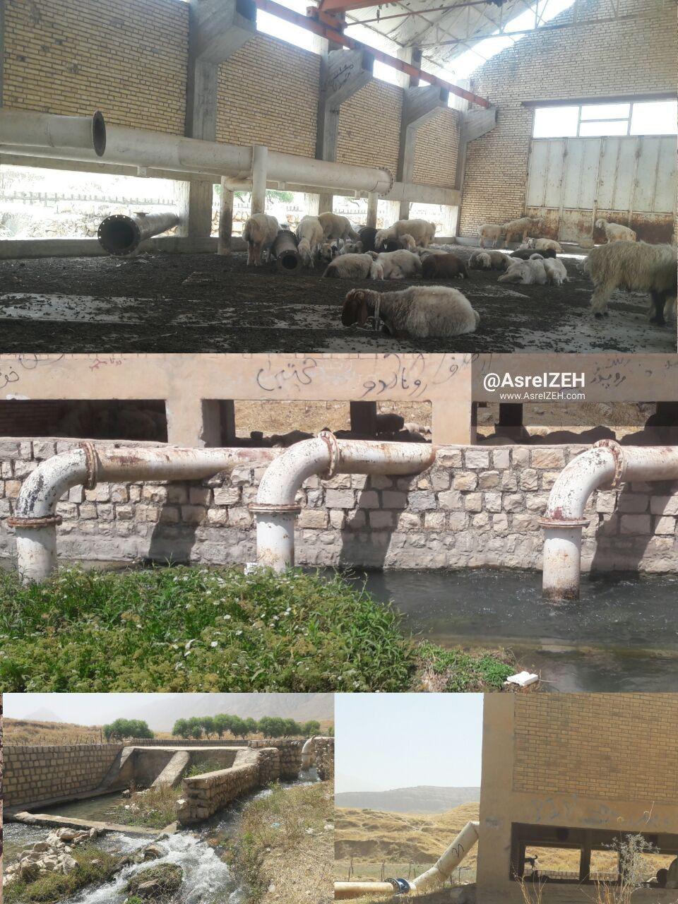 عکس/ تبدیل شدن پروژه انتقال آب چشمه سیاهچال سوسن به اسطبل گوسفندان