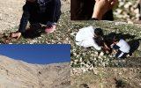 عکس/ طرح ملی جنگلانه و کاشت نهال در روستای کهباد ایذه