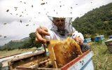 ایذه قطب تولید عسل در خوزستان