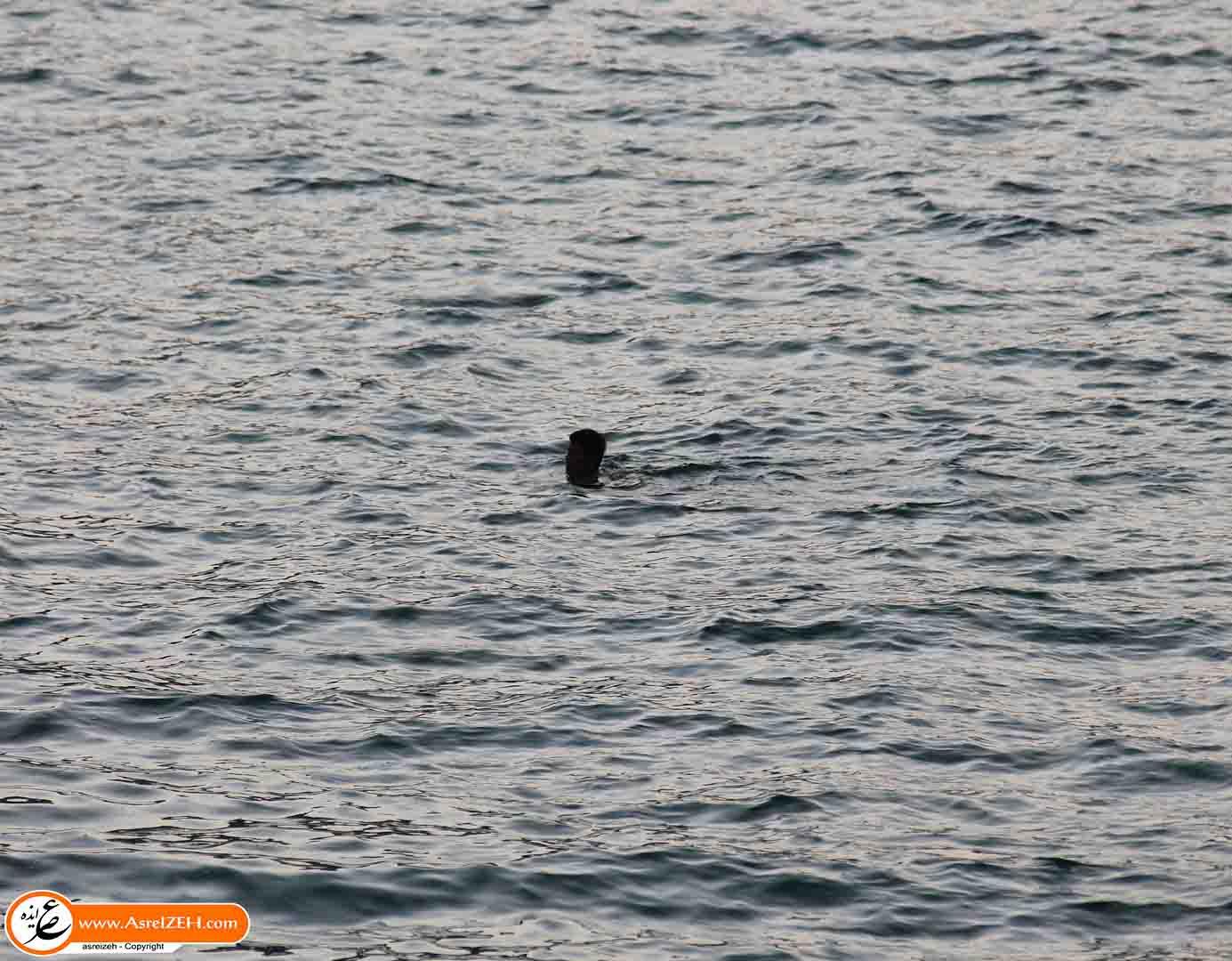 جسد جوان غرق شده در دریاچه سد کارون۴ پس از چهار روز پیدا شد