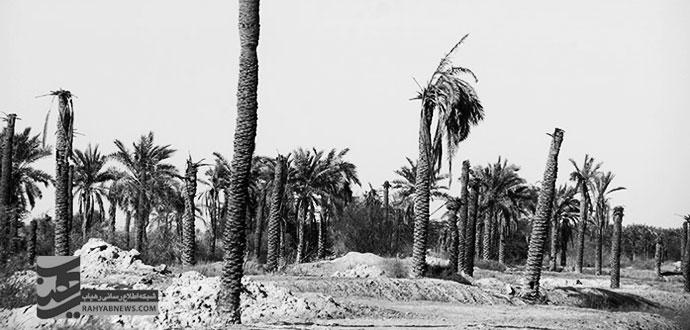 نخلهای خوزستان تشنه میمیرند تا زمینهای کشاورزی اصفهان سیراب شوند
