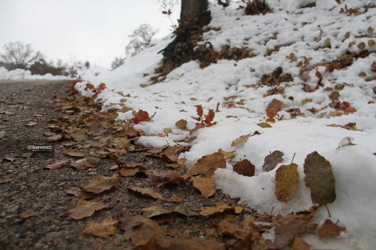 زیباییهای برف پاییزی در بلوط بلند دهدز